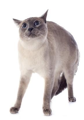 Solutions contre le stress du chat