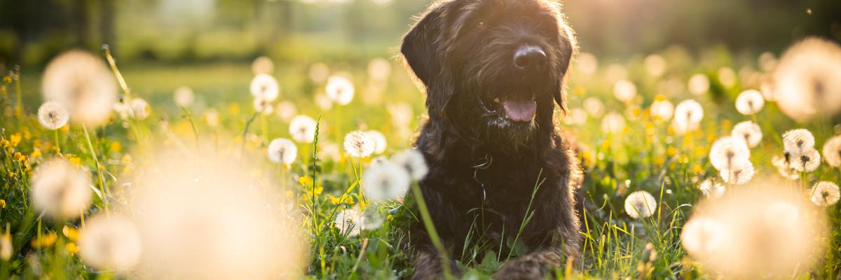 10 tips voor allergische honden