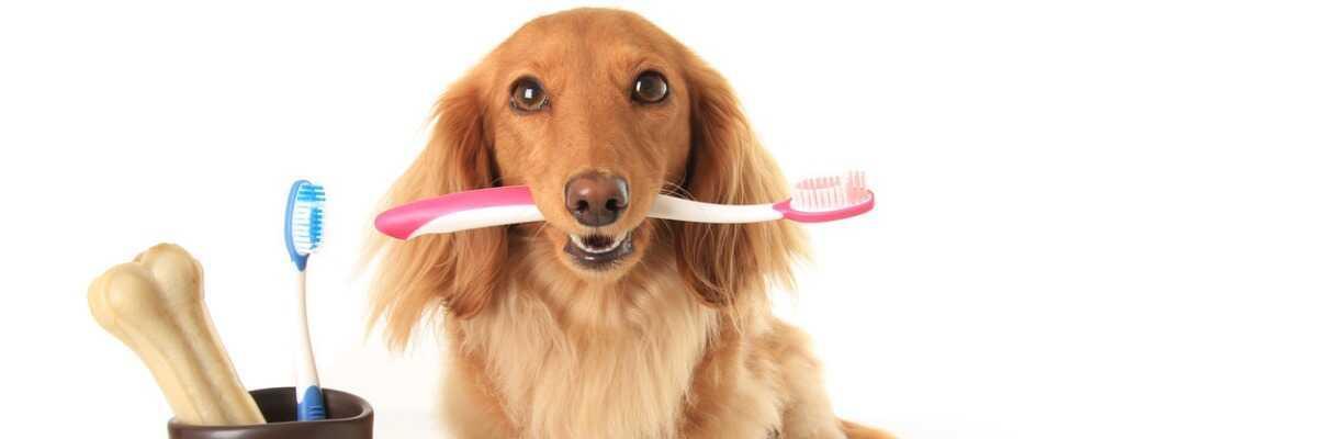 Dentifrice pour chien : comment prendre soin des dents de votre animal ?