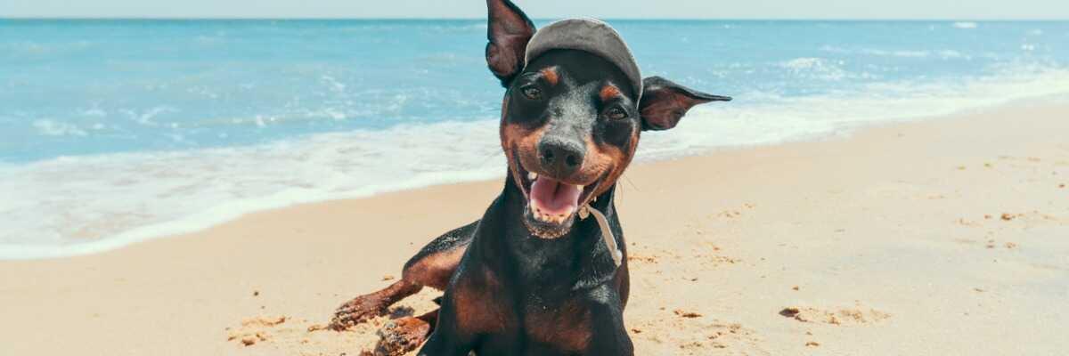 Comment bien préparer mes vacances dans le Sud avec mon chien ?