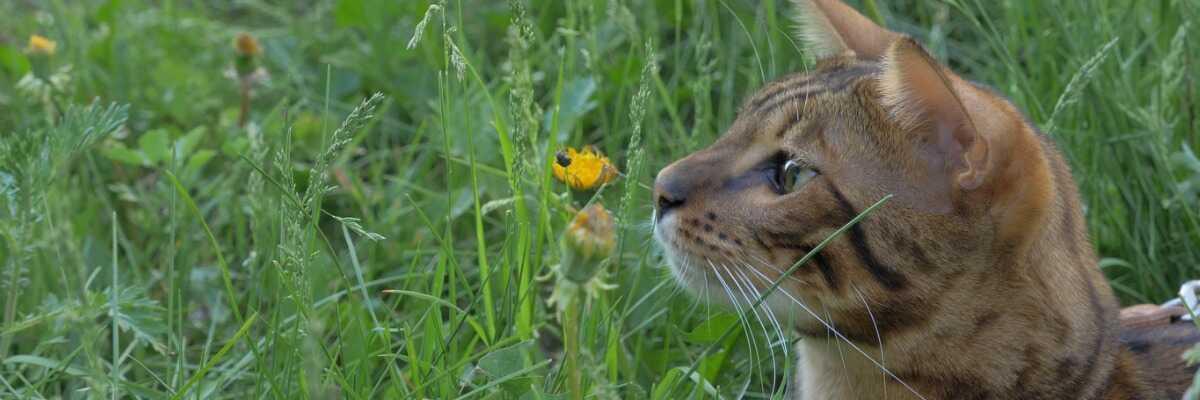 Quelles sont les conséquences d'une piqûre d'insecte chez le chat ?