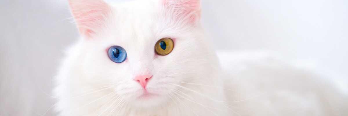 Comment les chats voient-ils les couleurs ?