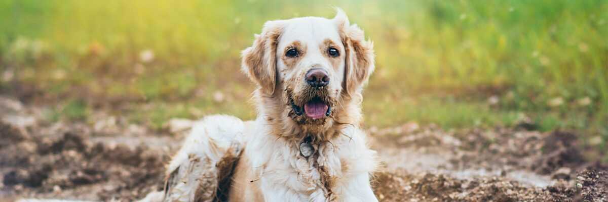 Comment enlever l'odeur de chien ?