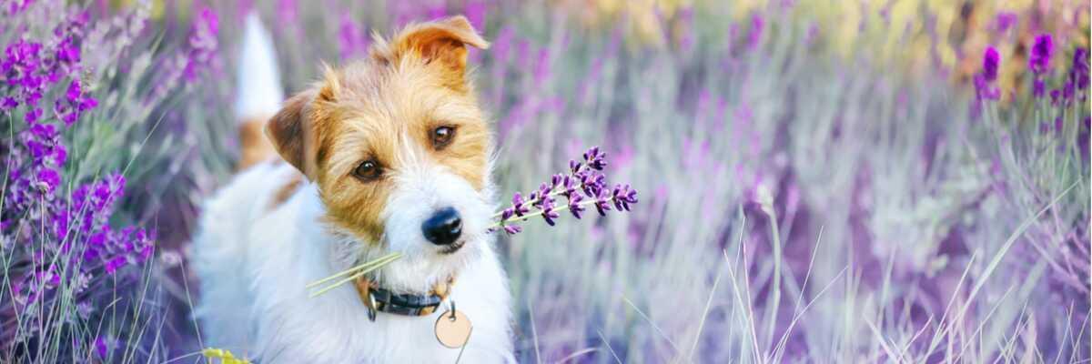 Phytothérapie pour chien : est-ce efficace ?