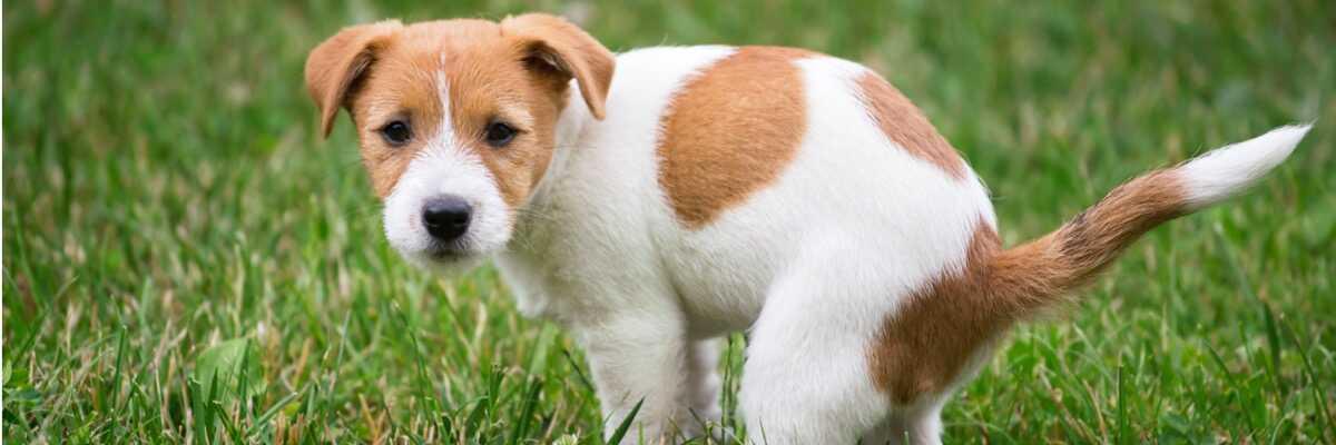 Qu'est-ce qu'un répulsif pour chien ?