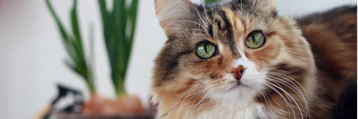 Quelle est la durée de vie d'un chat ?