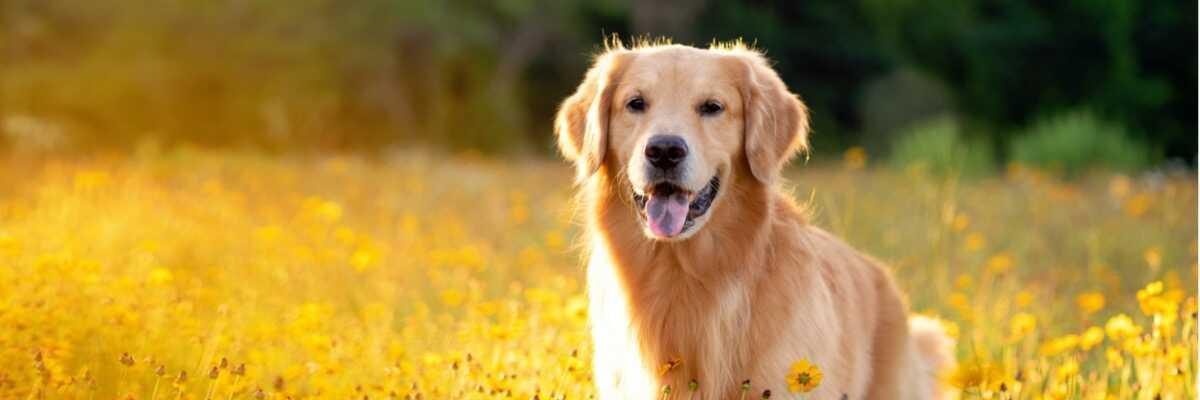 Ostéopathie pour chien : est-ce efficace ?