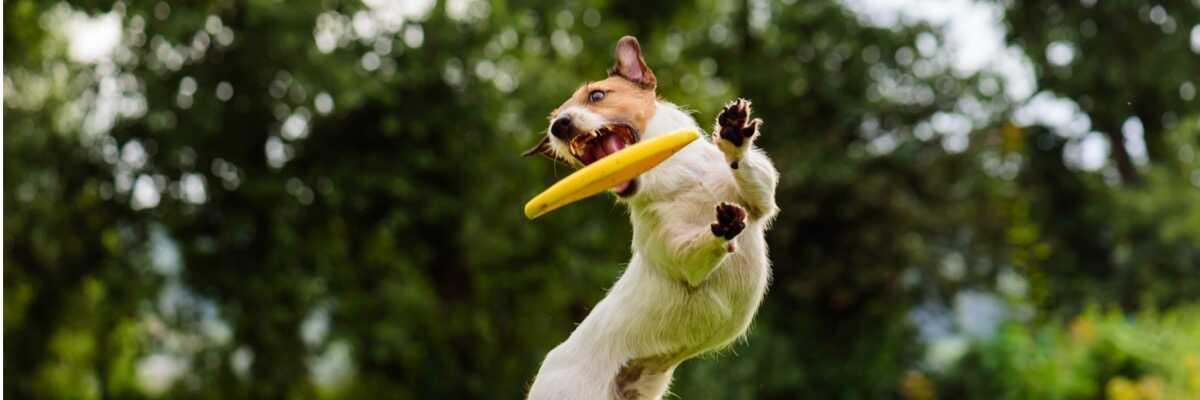 Comment éduquer un chien hyperactif ?