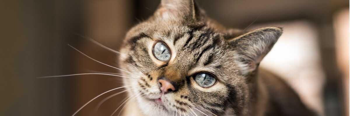 Comment connaître les affections des yeux de mon chat?