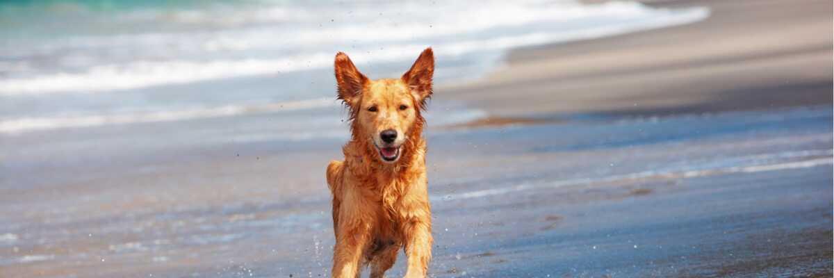 Comment préparer les vacances d'été avec mon chien?