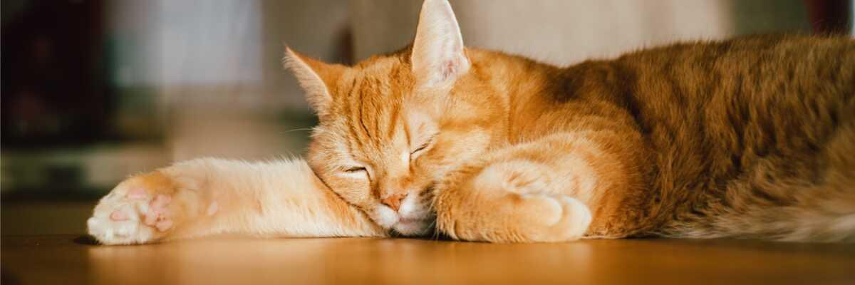 Comment soulager mon chat qui a de l'arthrose?