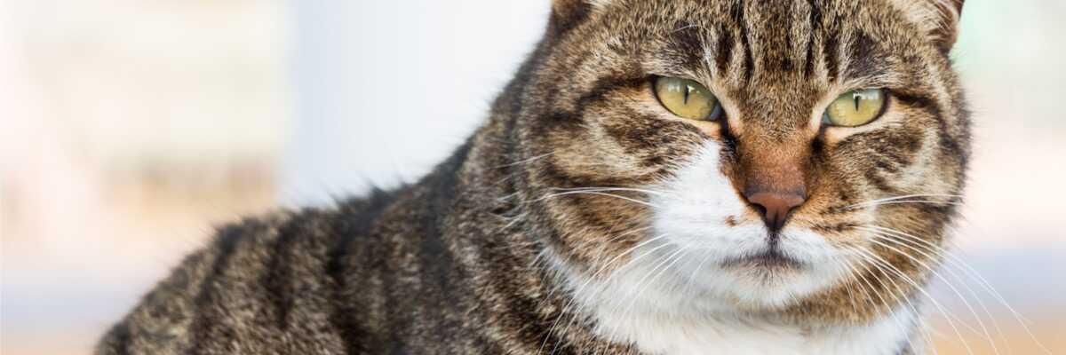 Que puis-je faire pour mon chat qui vieillit?