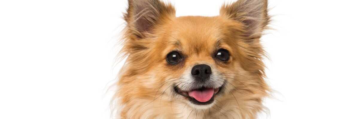 Comment choisir un probiotique pour chien ?