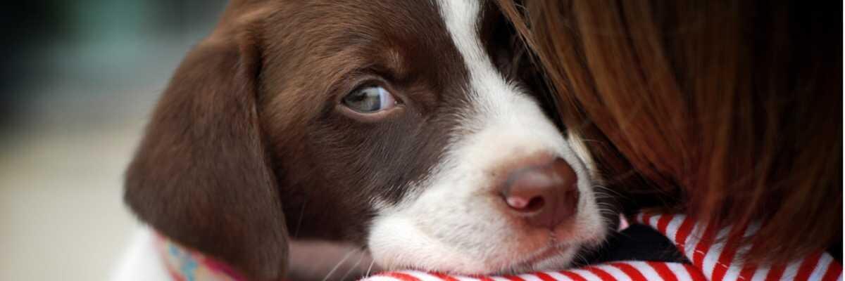 Comment soigner la cataracte du chien ?