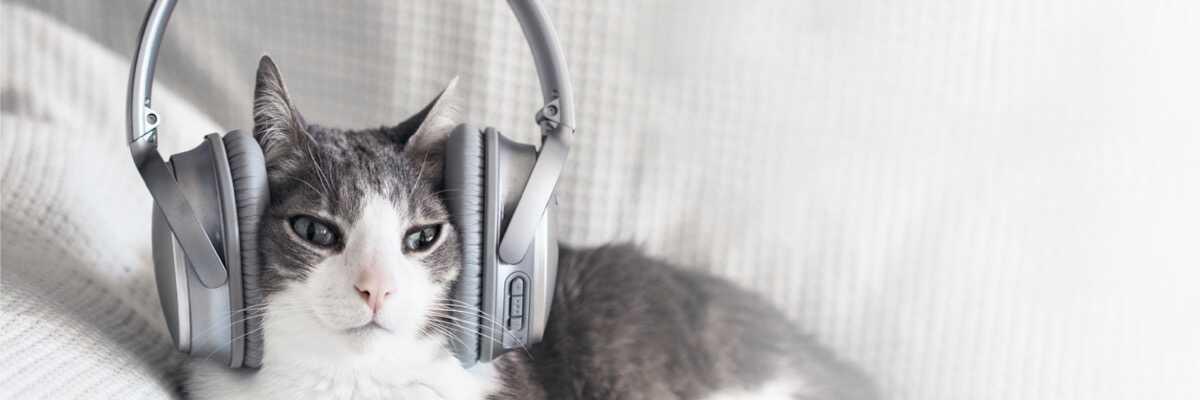Les ultrasons pour chat sont-ils dangereux ?