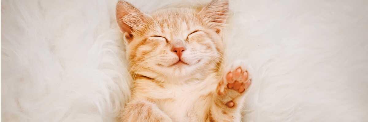 A quoi servent les coussinets du chat ?