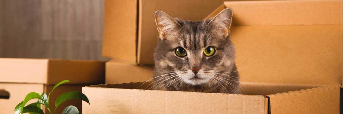 Comment déménager avec un chat ?