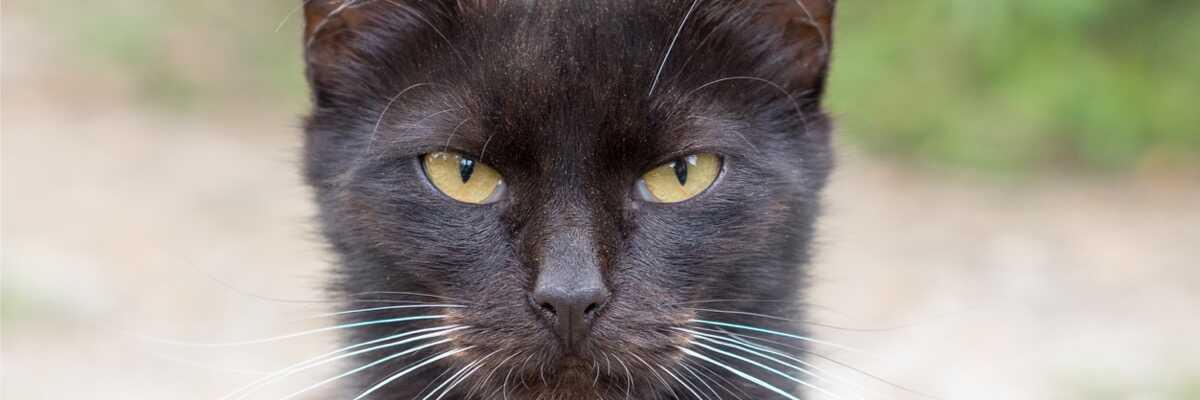 Comment calculer l'âge d'un chat ?