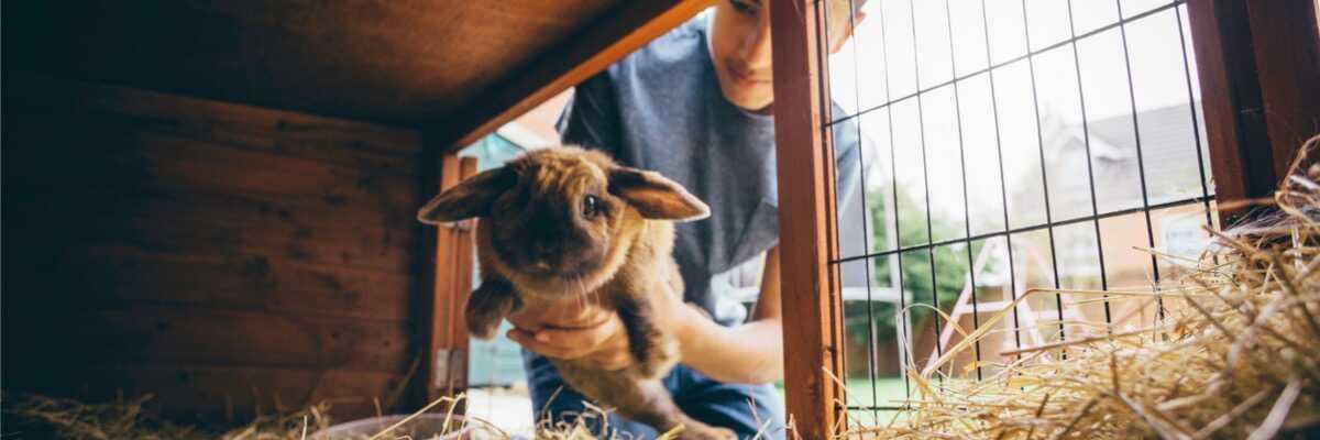 Comment utiliser la luzerne pour son lapin ?