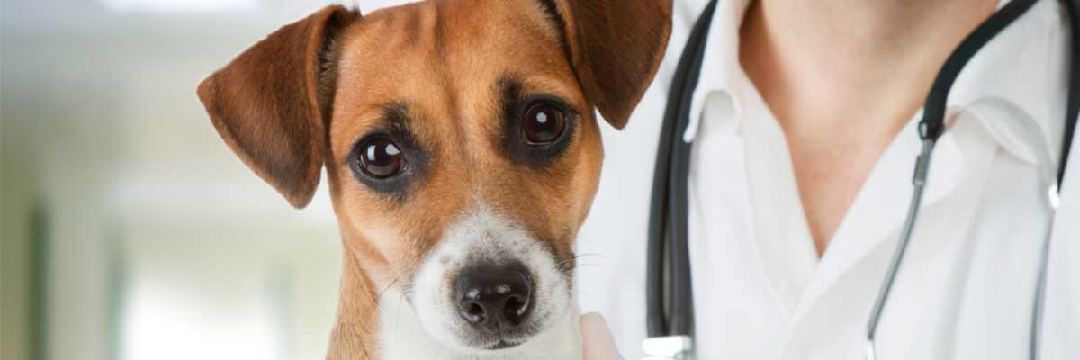 Comment soigner le tétanos chez le chien ?