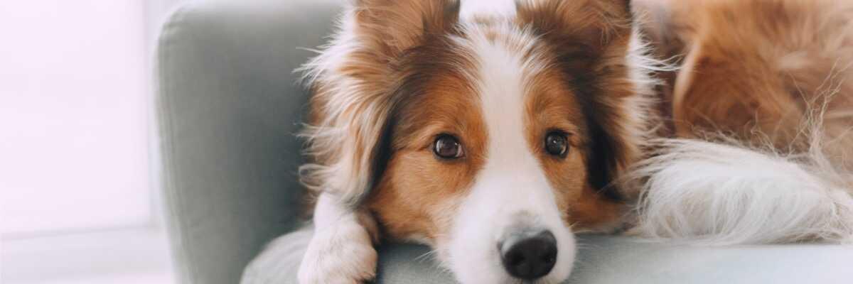 Empoisonnement du chien : quels sont les symptômes ?