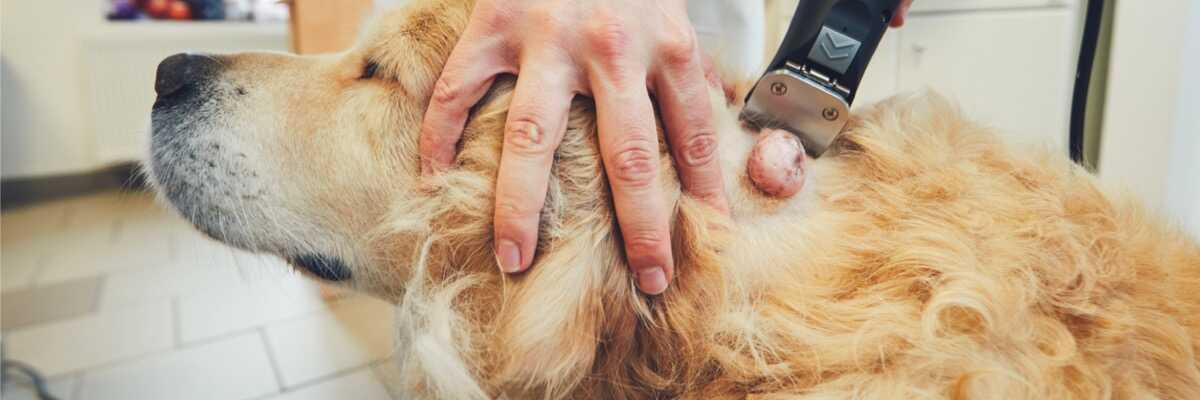 Qu'est-ce que le mastocytome du chien ?