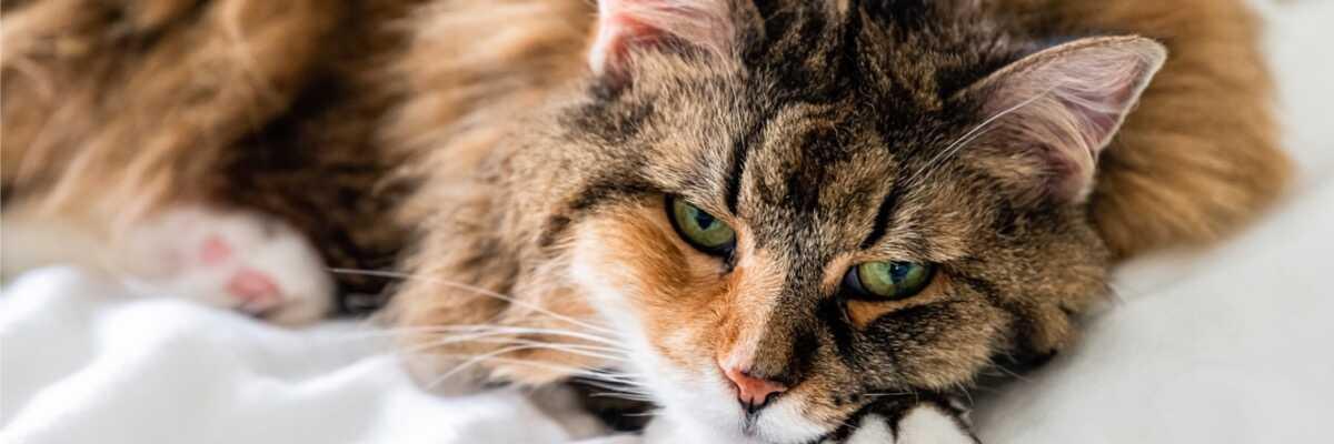 Quel symptôme pour l'empoisonnement du chat ?