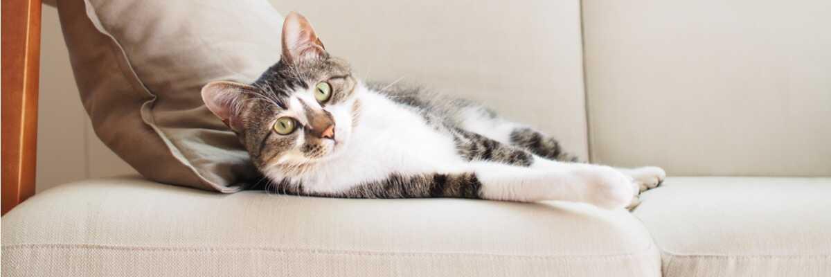 Comment soulager la cataracte du chat ?