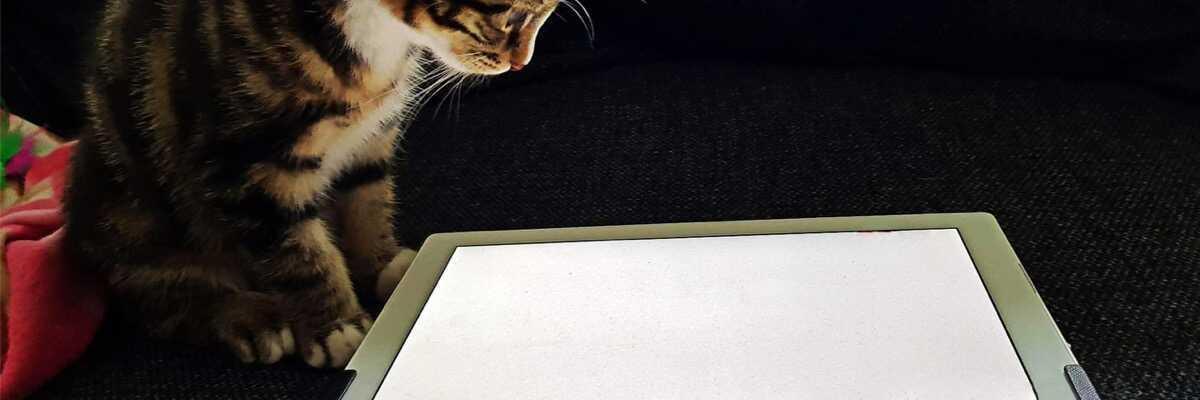 Quels jeux pour chat sur tablette choisir ?