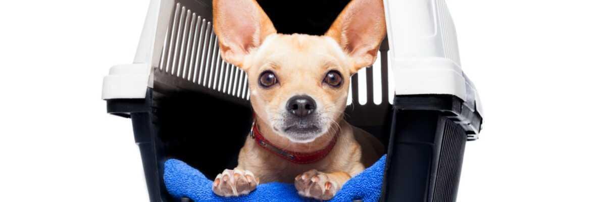 Transport du chien : sac ou cage ?