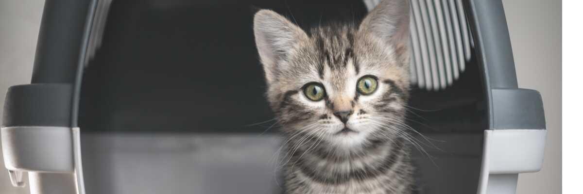 Transport du chat : sac ou cage ?