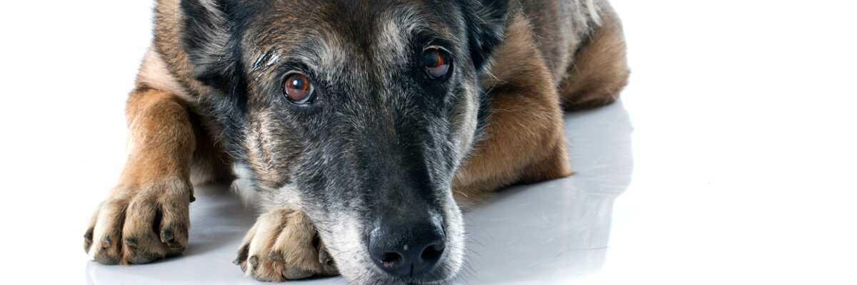 Qu'est-ce que le Bravecto pour chien ?