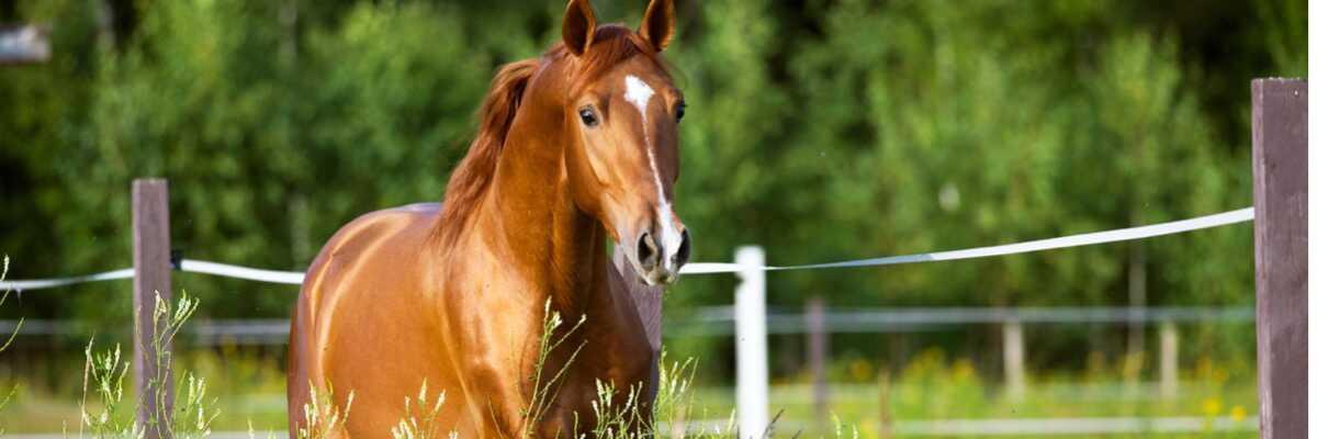 Quelle est la température normale du cheval ?