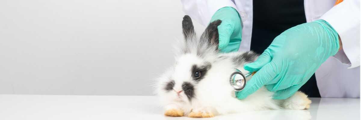 Pourquoi mon lapin éternue ?