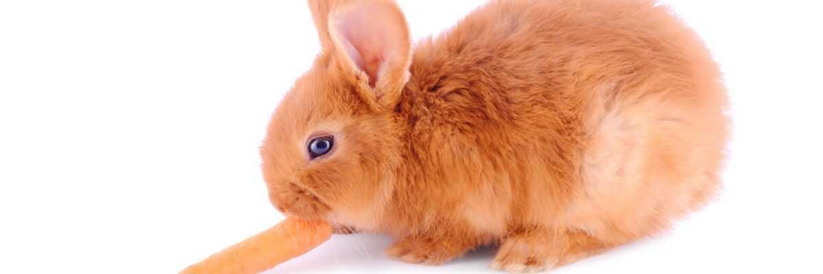Comment se déroule le sevrage du lapin ?