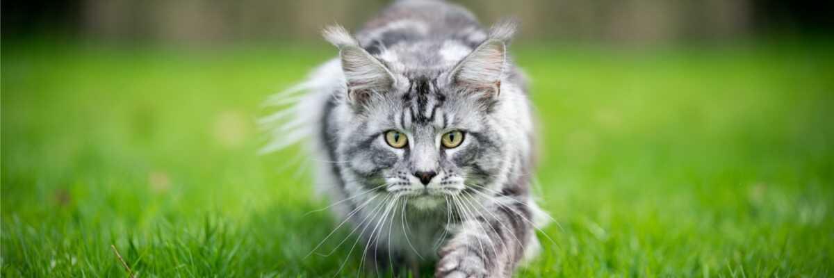Quel âge pour la castration d'un chat ?