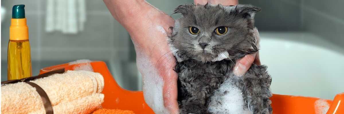 Comment laver mon chat ?