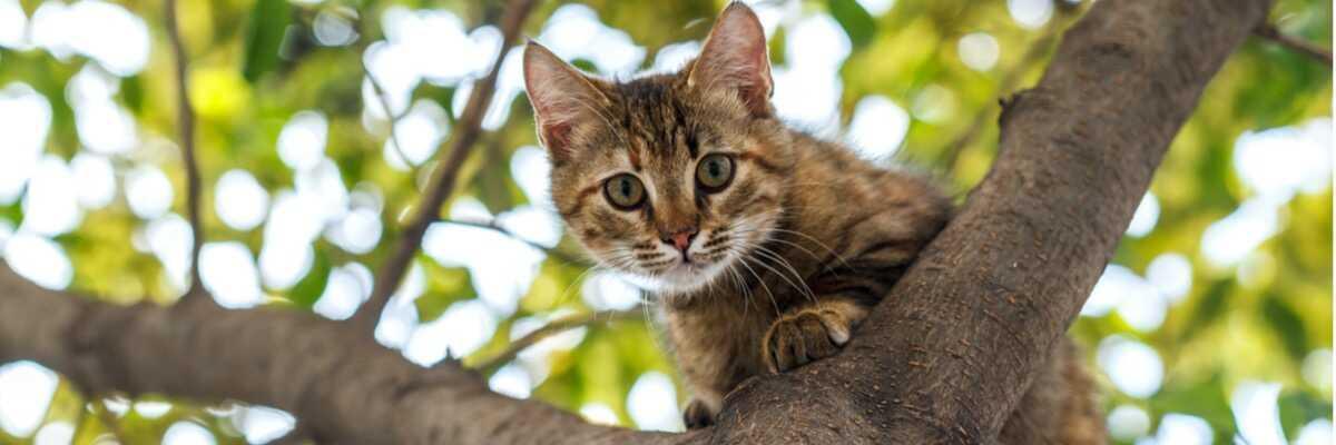 Un chat peut-il se perdre ?