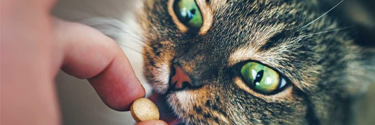 Donner un cachet à son chat : comment procéder ?