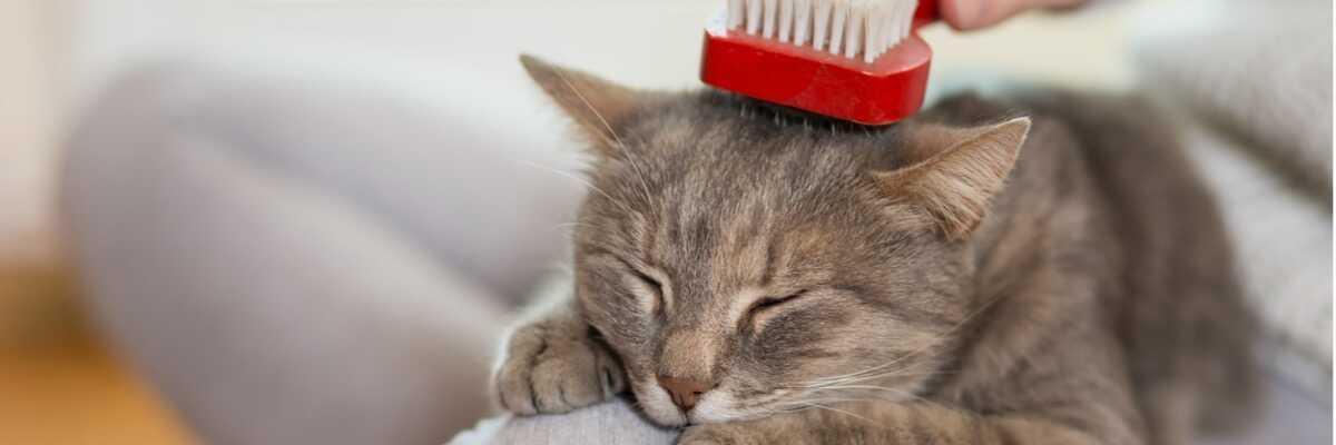 Comment soigner la pelade du chat ?