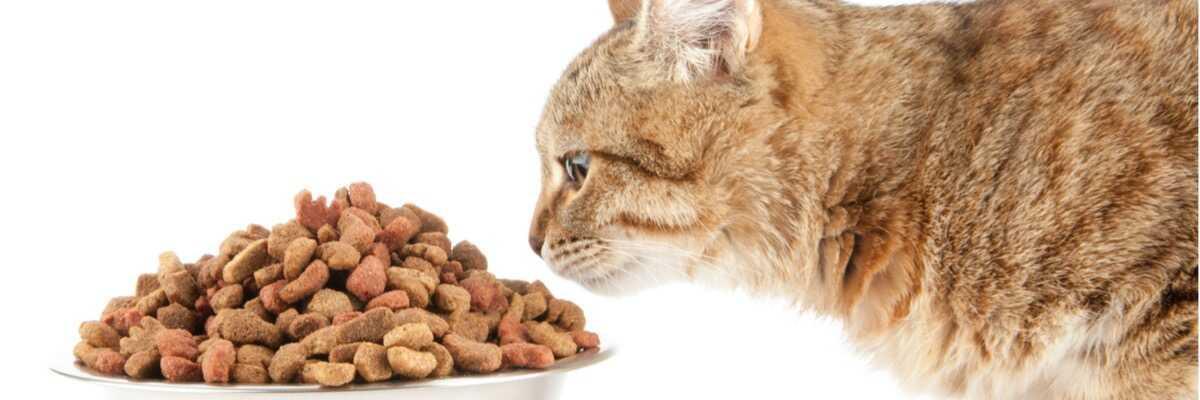 Quel distributeur de croquettes pour chat choisir ?