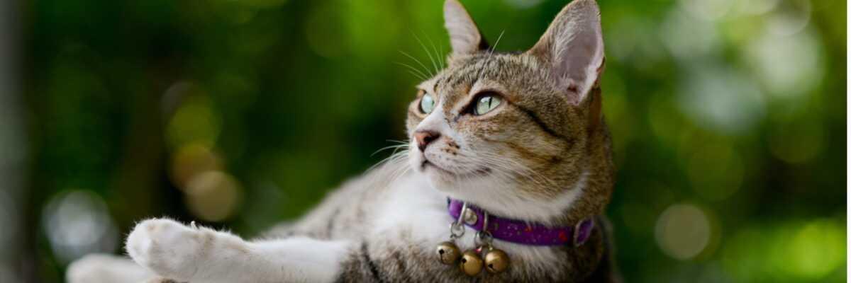 Quel collier pour chat choisir ?