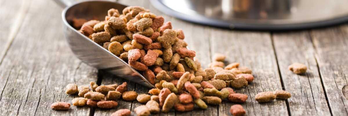 Comment soulager l'allergie alimentaire de mon chien ?