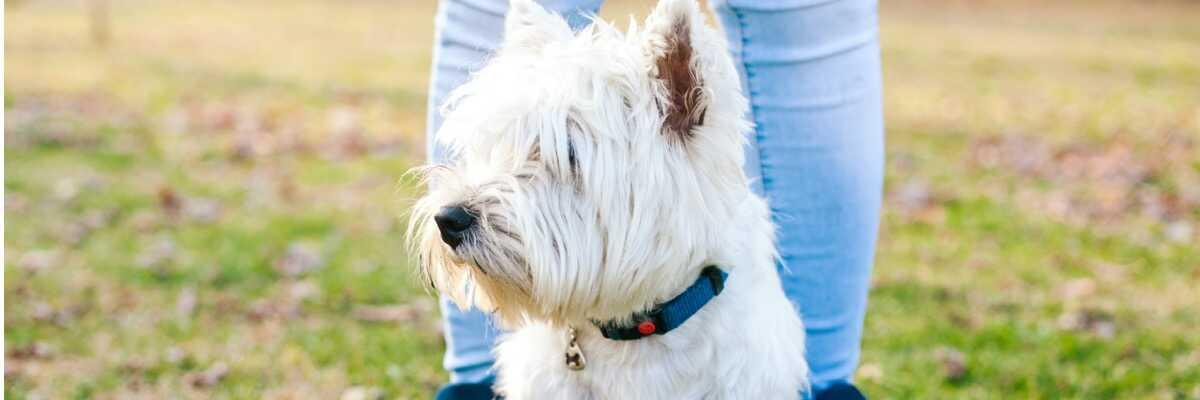 Comment choisir un collier GPS pour mon chien ?