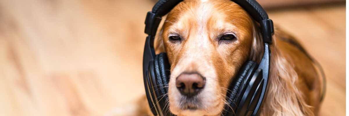 Les ultrasons sont-ils dangereux pour le chien ?