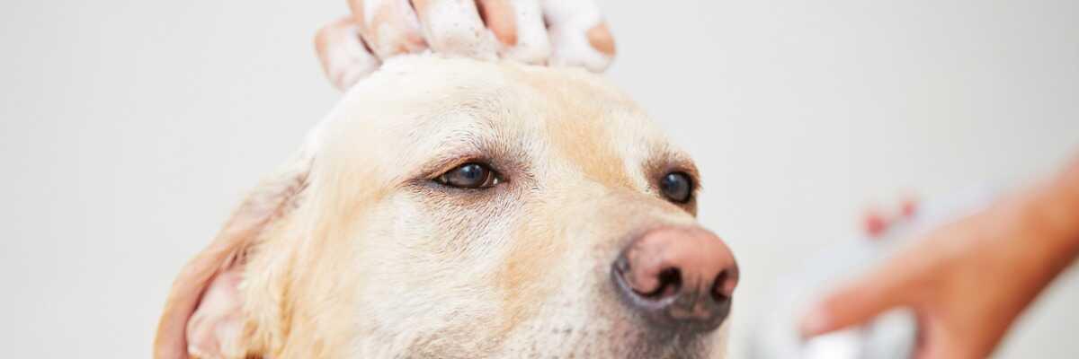 Est-ce que je peux toiletter mon chien moi même?