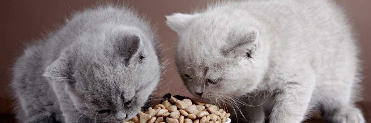 La croquette pour chat adaptée à chaque âge