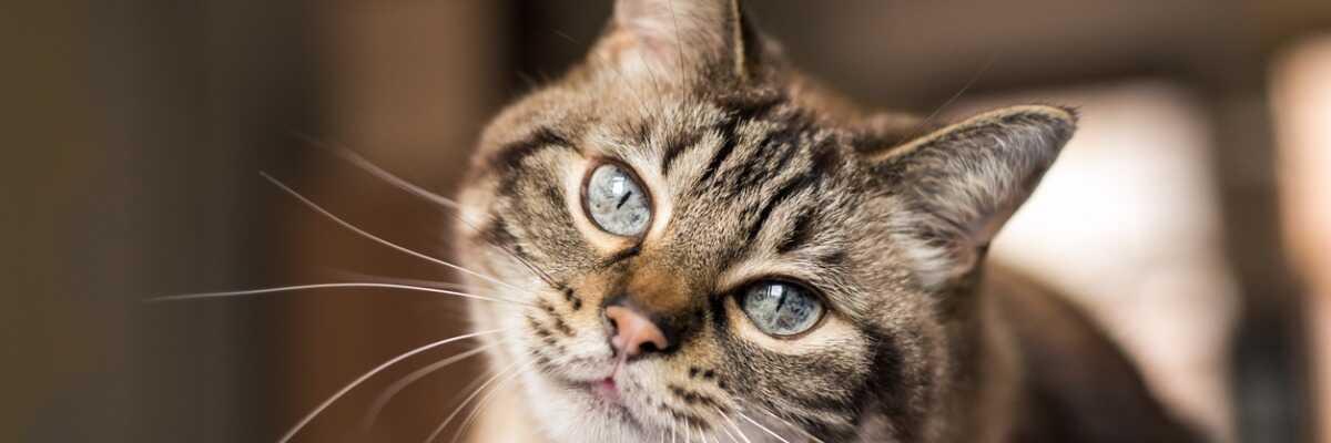 Comment bien nourrir mon chat qui vit en intérieur?