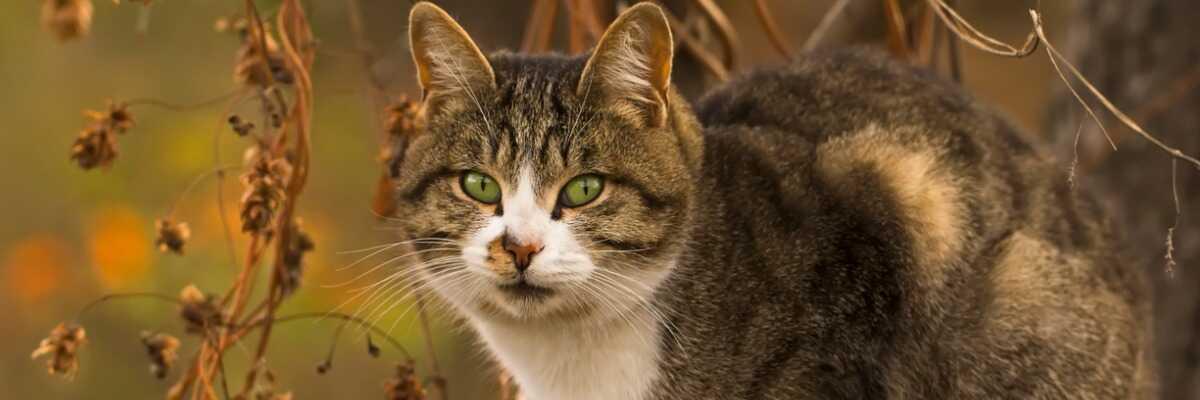 Mon chat a des vers intestinaux, que puis-je faire?