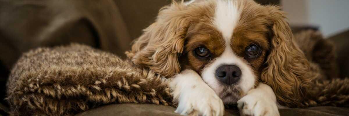 Est-ce que mon chien peut être stressé?